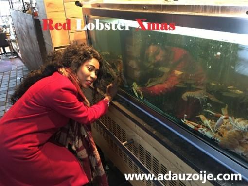 Red Lobster Xmas